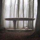 DZN_FOREST-PAV
